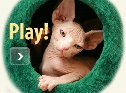Kittens live on-line webcam